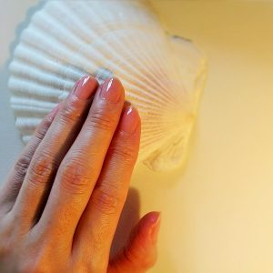 彩式ねいる ホタテ貝殻