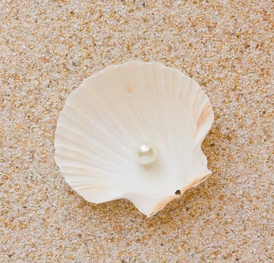 ホタテ貝殻&真珠