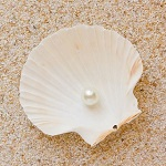 150ホタテ貝殻&真珠
